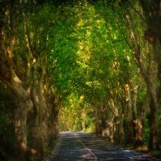 Road to St. Remy de Provence, one of my fav places in all the world.  Seeing this takes me there, aahhh!