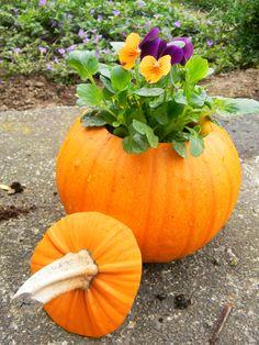 Made my own pumpkin planter :)