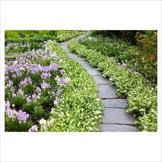 hosta along walkways