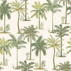 Palmbomenbehang. Fresco Palm Wallpaper by Graham and Brown