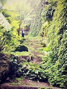 Sinkhole Gardens, South Australia  #SINKHOLE
