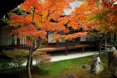 建仁寺:紅葉の潮音庭