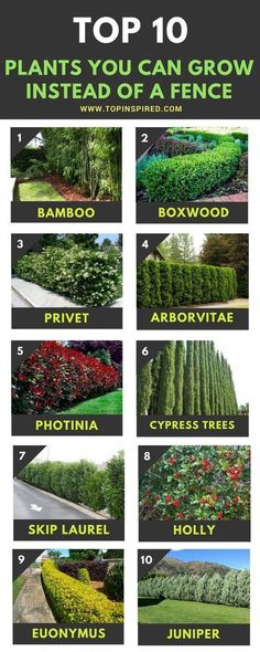 Top 10 Beautiful Plants You Can Grow Instead Of A Fence – Top Inspired - DIY Garten Landschaftsbau Landscaping Shrubs, Front Yard Landscaping, Landscaping Ideas, Outdoor Landscaping, Mulch Ideas, Inexpensive Landscaping, Landscaping Supplies, Garden Hedges, Garden Trees