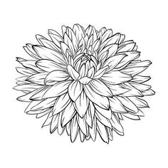 beautiful monochrome, black and white dahlia flower isolated. Hand-drawn contour lines and strokes. for greeting cards and invitations of wedding, birthday, mother's day and other seasonal holiday Stock Vector - 43266871 Dahlia Flower Tattoos, Birth Flower Tattoos, Flower Tattoo Designs, Aster Flower, Black And White Flowers, Black And White Painting, Chrysanthemum Drawing, Chrysanthemum Flower, November Birth Flower