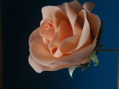 Great step by step on making a full sugar rose