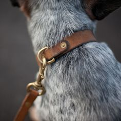 #Fancy Leather Dog Collar and Leash