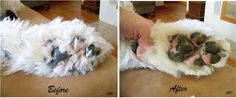 Pads- Trimming the Old English Sheepdog's Feet