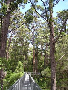 Denmark WA Tree Tops Walk, Australia