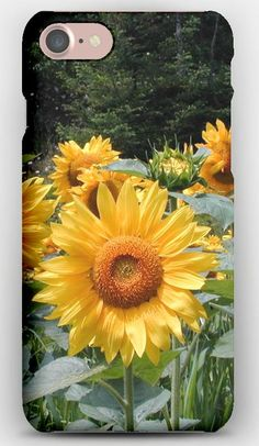 iPhone 7 Case Sunflowers, Field, Summer, Trees