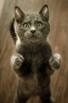 New free photo by Marko Blazevic. More work by Marko on Pexels at https://www.pexels.com/u/marko-blazevic-194642/ #animal #pet #cute