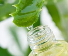 ElÁloeVera es una planta conocida desde tiempos muy antiguos por sus virtudes medicinales, y para conseguir un aspecto mas bello. Cleopatra la usaba con frecuencia y los médicos del año...