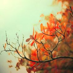Nature Photography mint and orange autumn home decor by Raceytay, $30.00