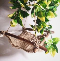 Lizard Hammock, Tree Top Suspension Lounge