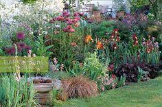 purple white border garden - Google Search