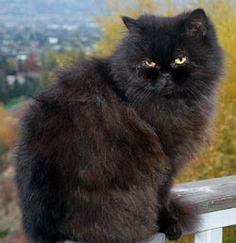 SOS Animal com amor: Gato persa parte 2