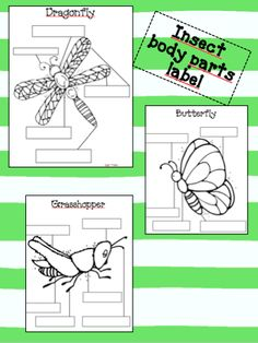 First Grade Dual: Insect- Body Parts Label- use as an interactive bulletin board center First Grade Science, Kindergarten Science, Elementary Science, Science Classroom, Teaching Science, Teaching Tools, Insect Activities, Science Activities, Montessori Science