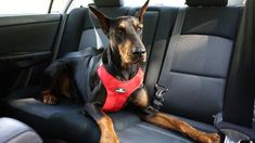 A pet-transportation service helps make sure it's a bone voyage Road Trip With Dog, Dog Travel, Travel Tips, Travel Guides, The Perfect Dog, Cat Carrier, Dog Safety, Dog Harness, Dog Friends
