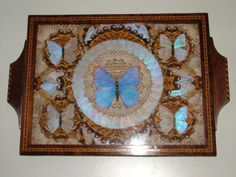 real butterfly wings mounted in tray circa 1900-1930?