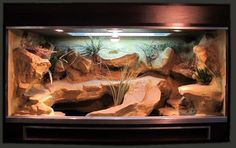 Marvelous 70+ Best Ideas Bearded Dragon Habitat https://meowlogy.com/2017/03/29/70-best-ideas-bearded-dragon-habitat/ If your plan is to house Bearded Dragons together, utilize a bigger cage to lower the potential for aggression and monitor your dragons closely. Bearded Dragons are decidedly one of the the optimal/optimally pet lizards it's possible to own. They are usually sociable creatures...
