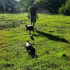 Minha matilha de manhã cedinho passeando no sítio. Vamos ver se o tamarindo já está maduro?  #matilha #vidadesitio #tododiapoderiaserassim #gentenocampo #countrylife #dappledachshund #dachshund #mutt #mixedbreed