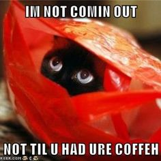 Even Basement Cat fears the uncaffinated!