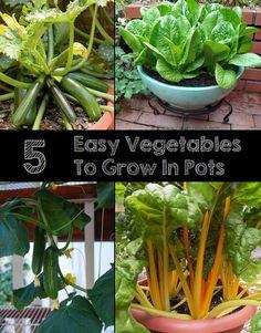 101 Gardening: 5 Easy vegetables to grow in pots #vegetable_gardening