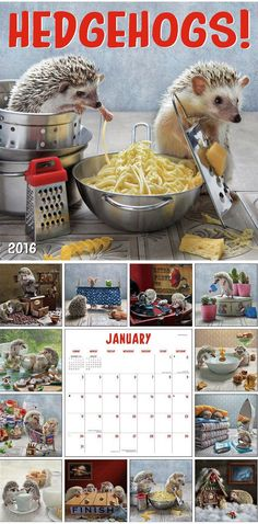 These 12 months of cuteness.   Community Post: 44 Amazingly Cute Products Every Hedgehog Lover Needs