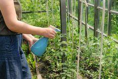 Come usare il bicarbonato di sodio come fungicida per le piante - GreenMe.it Baking soda is a truly versatile product that we should always have at home. Garden Wall Designs, Garden Design, Outdoor Plants, Garden Plants, Dream Garden, Home And Garden, Chlorophytum, Design Jardin, Green Life