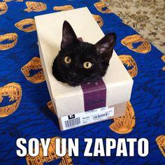 """¡Hoy es miáucoles! Esta semana el gato dice: """"Soy un zapato""""."""