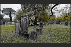 https://flic.kr/p/B1XJnp | Autumn at the Jewish cemetery in Ferrara | © All rights reserved. Use without permission is illegal.