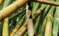 Metro Photo Challenge 2012, Daily Winner  Belgium 2012-11-10 - Bamboo