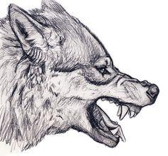 Growling wolf …