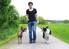 Schimmelsuche: Immer der Schnauze nach - Spürhund im Einsatz - Sehen Sie dazu einen Beitrag bei HOTELIER TV: http://www.hoteliertv.net/weitere-tv-reports/schimmelsuche-immer-der-schnauze-nach-spürhund-im-einsatz/