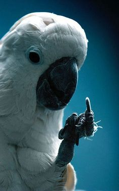Talking Parrots pictures and quotes | Funny Magician Cruise Ship Parrot Joke