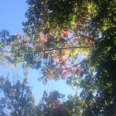 Autumn breeze #breeze #sky #tree #colours #nature #movement #afternoon #light