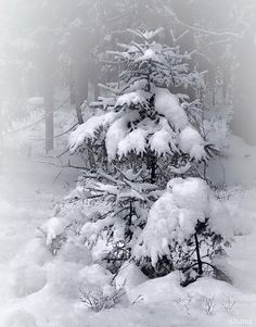let it snow. let it snow. let it snow! I Love Snow, I Love Winter, Winter White, Snow Pictures, Winter Magic, Winter's Tale, Winter Scenery, Winter Trees, Snow And Ice
