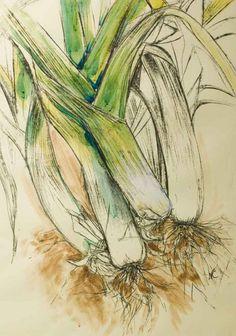 Natasha Clutterbuck - Curvy Leeks Sketch with a bit of watercolor Botanical Drawings, Botanical Art, Botanical Illustration, Vegetable Illustration, Watercolor Fruit, Watercolor Paintings, Watercolors, Sketchbook Inspiration, Art Sketchbook