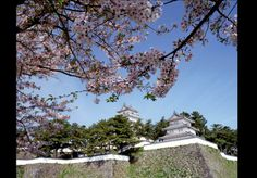 Shimabara Castle in Spring Shimabara Peninsula (Unzen City, Shimabara City, Obama Town & Minami-Shimabara City) Flowers / Castle ruins, temples and shrines