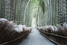 I booked a last minute travel to Kyoto once I heard that the snow precipitation forecast was high for last weekend. It was snowing about 10-15cm in Arashiyama on Saturday night (Feb 15th) allowing ...