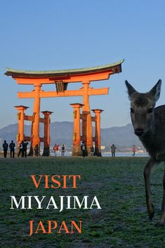 Discover Miyajima, Japan and more with the ultimate day-by-day travel itinerary and guide for one week in Japan. Click visit to learn about the best things to do and how to travel from Tokyo to Kyoto, Osaka, Nara, Hiroshima, Hakone, and more! #japan #travel