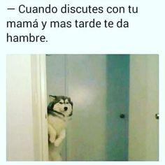 Funny Spanish Memes, Spanish Humor, Funny Relatable Memes, Funny Jokes, Hilarious, Animal Jokes, Funny Animals, New Memes, Funny Photos