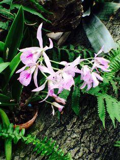 Krohn Conservatory 2014 Christmas Display #Krohnconservatory #whitehort #orchids