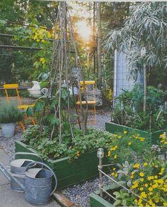 Lavakaulus Garden, Plants, Garten, Lawn And Garden, Gardens, Plant, Gardening, Outdoor, Yard