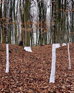 Fabric Wrapped Around Trees Creates Compelling Visual Interventions | Zander Olsen