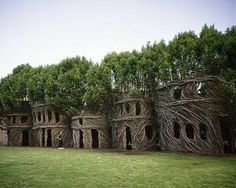 SOMETHING AMAZING: Amazing living sculpture made up of weaves trees
