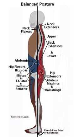 flat back posture google search pilates anatomy