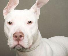 Bem Legaus!: Cachorros de adoção