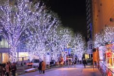 Christmas Celebrations in Tokyo