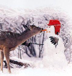 Eh, le bonhomme de neige, tu sais que tu es à croquer ? / Le daim et le bonhomme de neige. / The deer and the snowman.