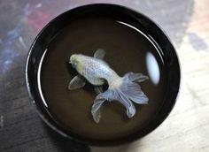 Riusuke Fukahori Resin painting Art 012  Hyperrealistic Animals Made From Painted Layers of Resin